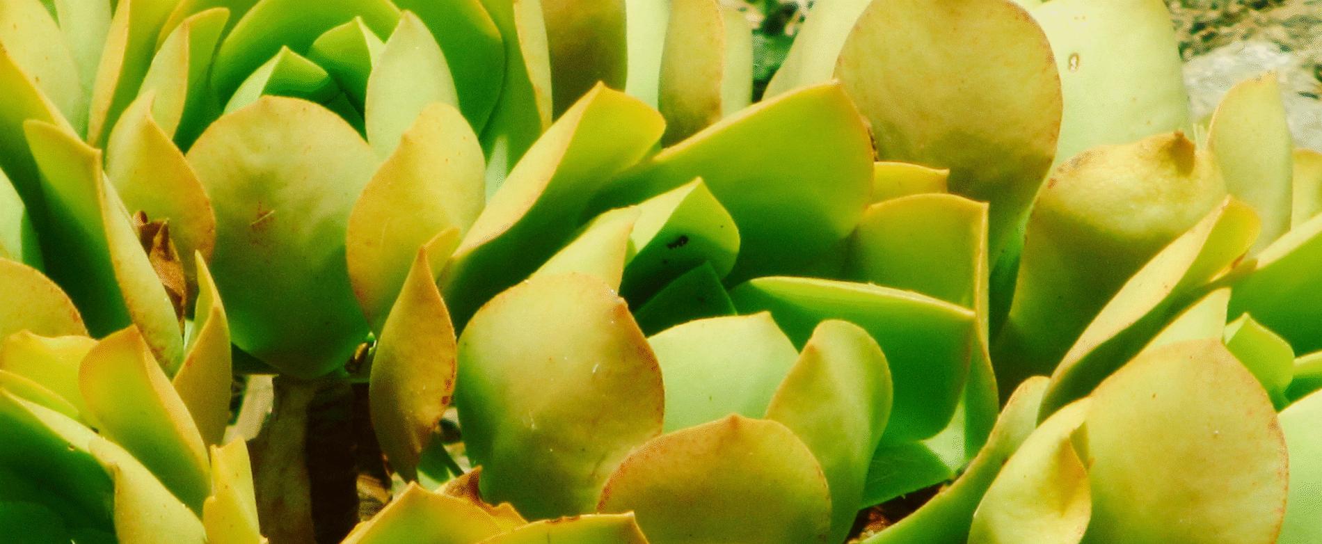 Conception et Création de Massif ou Jardin